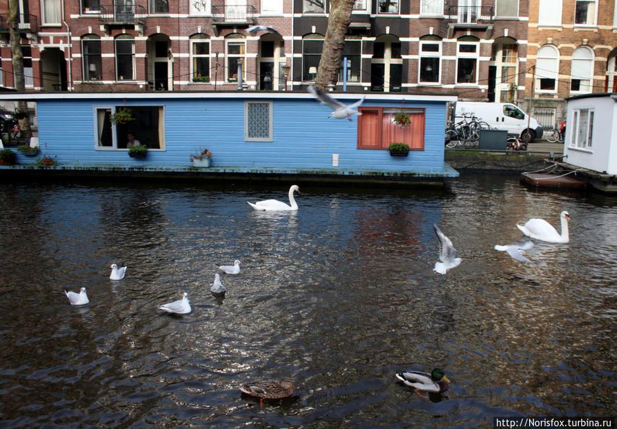 Жизнь на воде Амстердам, Нидерланды