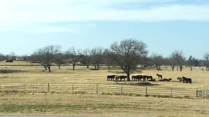 Помоему еще ровнее чем в Техасе, нигде ни одного холма не видно
