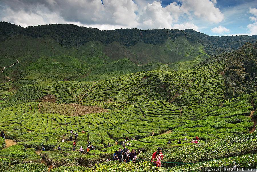 Кафе с видом на чайные плантации Танах-Рата, Малайзия