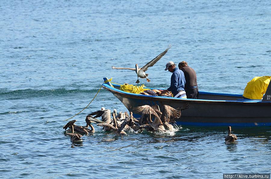 рыбаки поделил улов