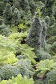 По таким джунглям без хорошего мачете не пройти