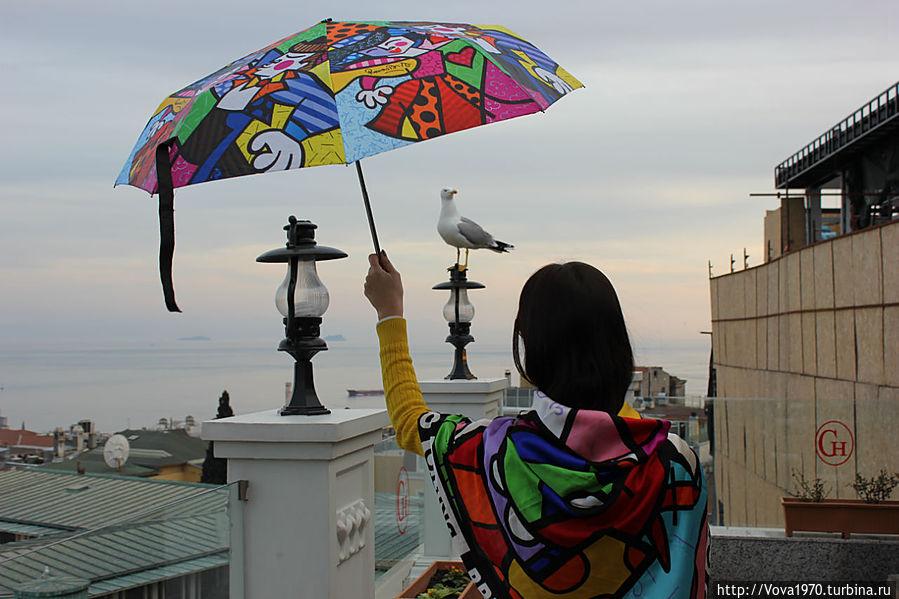 Вид на Мраморное море и чайку