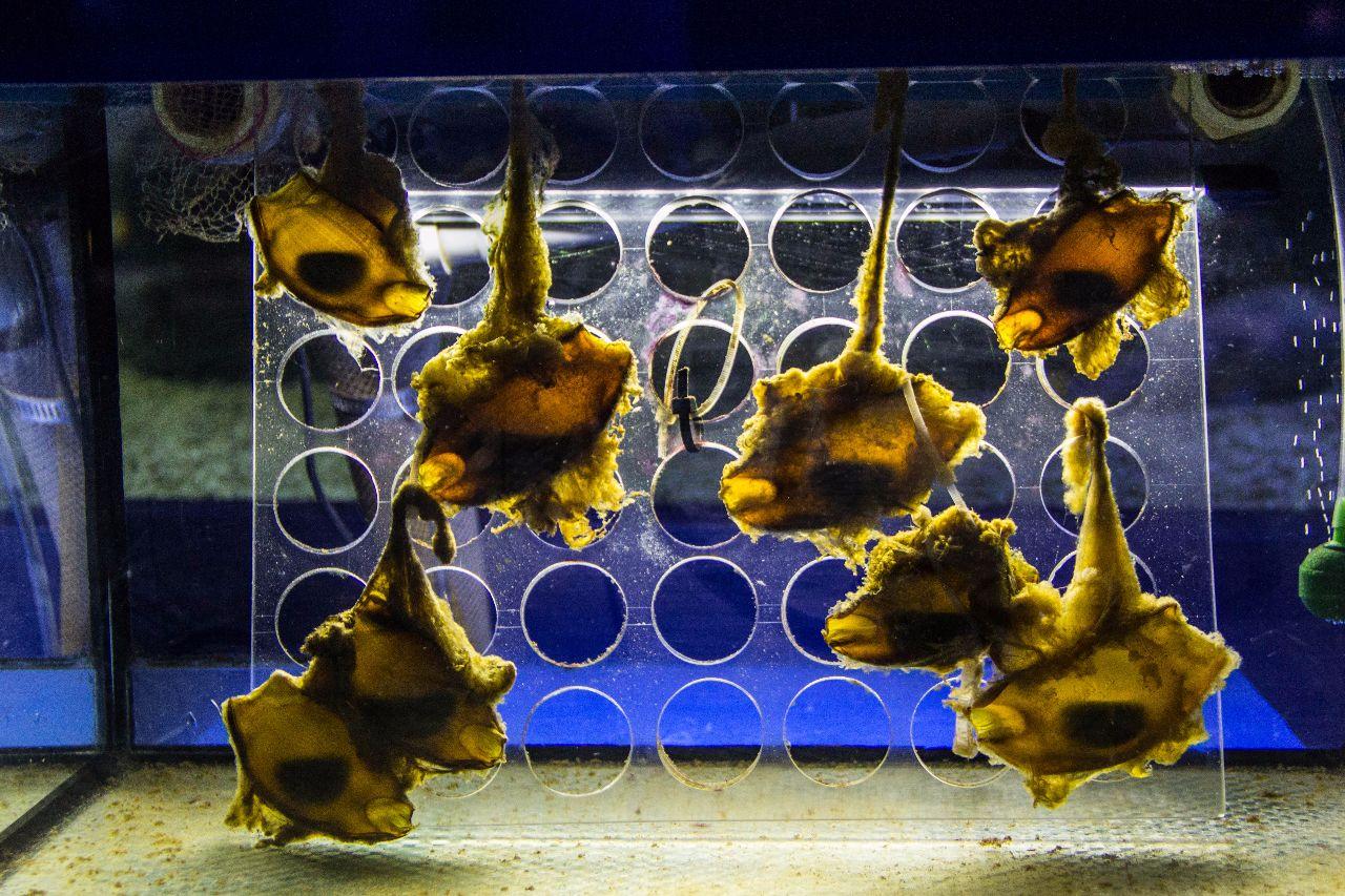 Калининград. Музей мирового океана. Аквариум Калининград, Россия