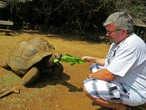 но, только появляется на виду корм, черепахи довольно прытко сползаются к