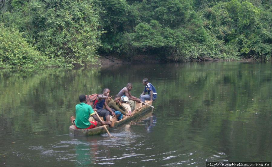 Пигмеи бака. Заповедник Джа, деревня маленьких людей Джа Заповедник, Камерун