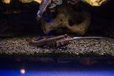 Калининград. Музей мирового океана. Аквариум