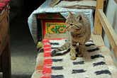 в этом гест-хаузе живет самая ухоженная кошка из встреченных нами в горах