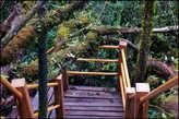 Мшистый  или  моховой  лес. Место  настолько  уникальное,  что  на  некоторой  высоте  от  земли  сквозь  него  проложены  ступенчатые  пешеходные  дорожки  для  туристов.
