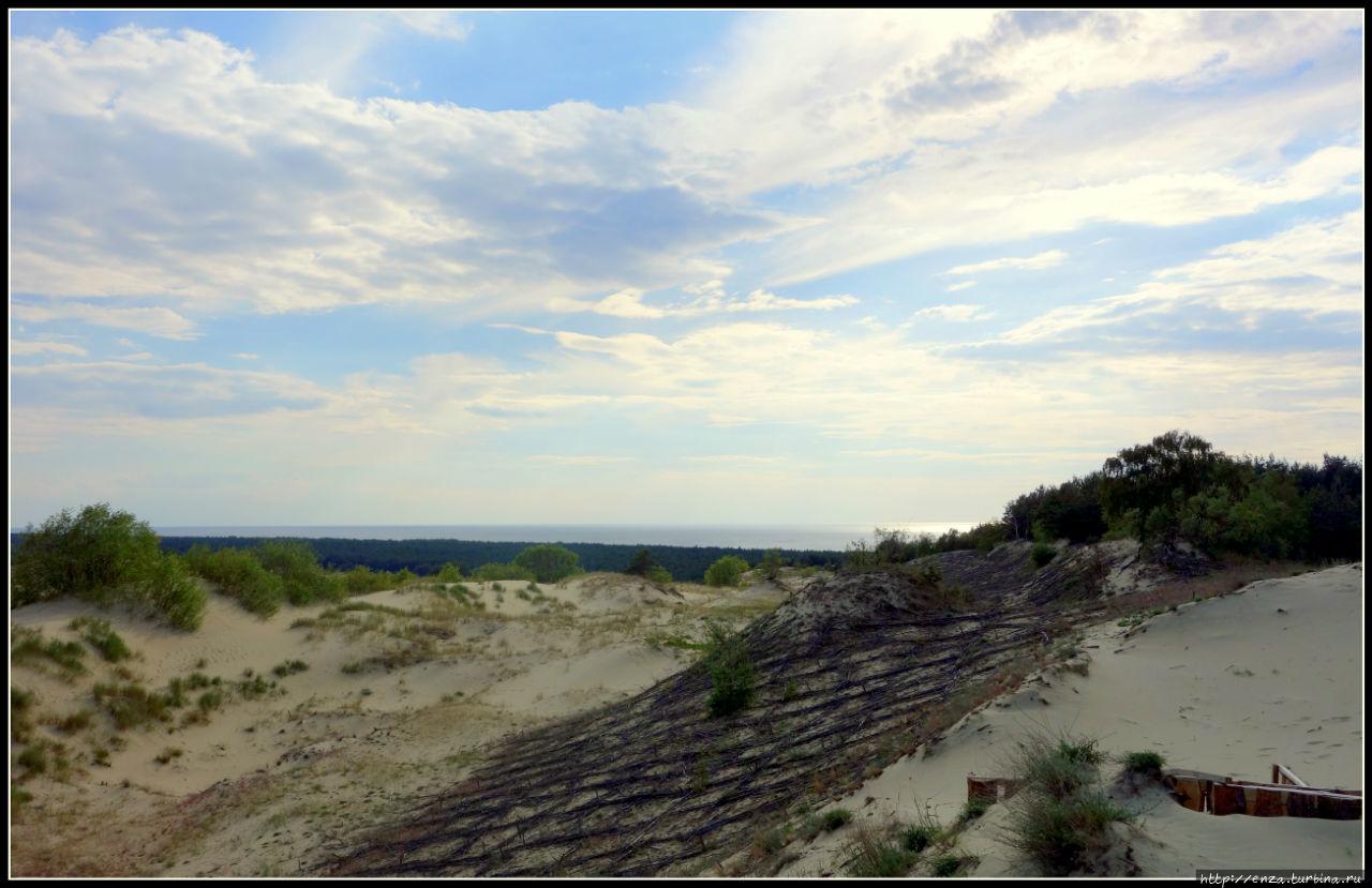 Куршская коса. И на песке растут деревья Куршская Коса Национальный Парк, Россия