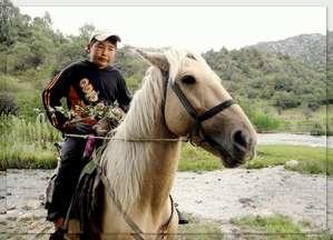 Сказочный конь Тулпар