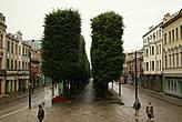 Стоит отметить примечательную особенность деревьев на этой аллее – они обладают строго параллелепипидной формой.