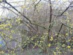 Первые признаки весны.
