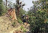 Дальше спокойная тропа приводит в лес, такой же с виду спокойный и тихий. Только это подумалось, как услышали собачий лай, и перед нами вихрем пронеслась стая больших обезьян, которых спугнул пес. Успели лишь мельком  заметить что это были лангуры, а вот сфотографировать, увы, не удалось. Слишком уж  проворными они оказались