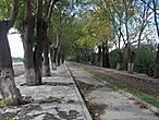 По этой аллее мы шли в сторону развалин Эфеса.