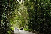 Замечательное место недалеко от Poipu, где автомобильная дорога проходит через туннель из лиан.