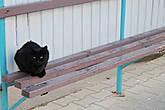 А вот и черная кошка!