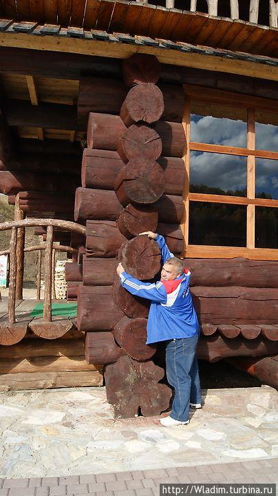 Вот из таких кедровых бревен, как в старину наши деды строили...