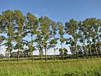Придорожные рощи Ивановской области. Вот оно — среднеполосное лето!