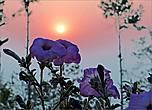 Рассвет в Нагаркоте