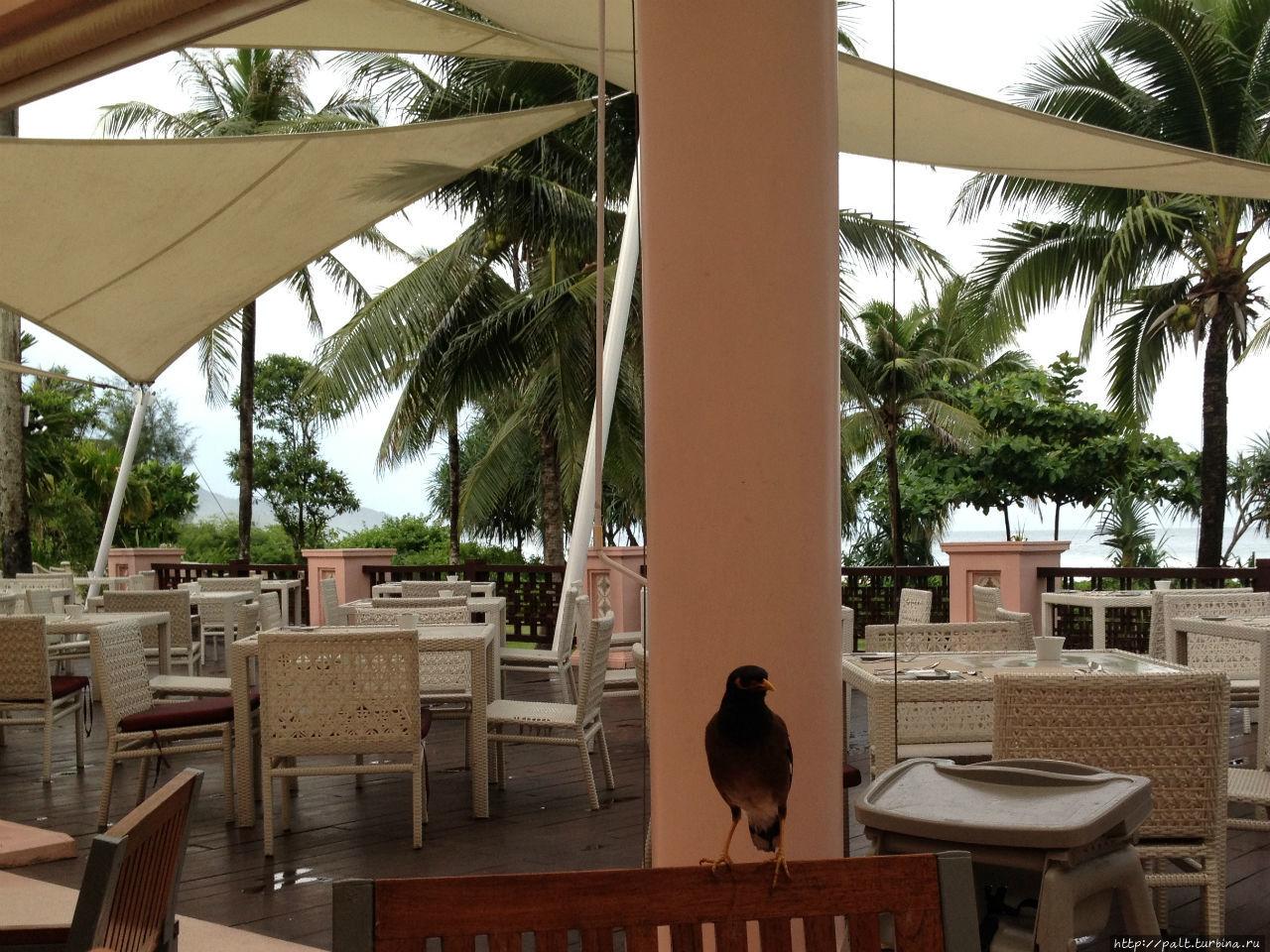 Открытая терраса ресторана Cove и местный птиц-постоянный посетитель