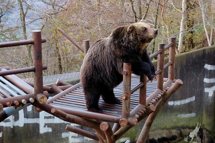 Вольер с медведями