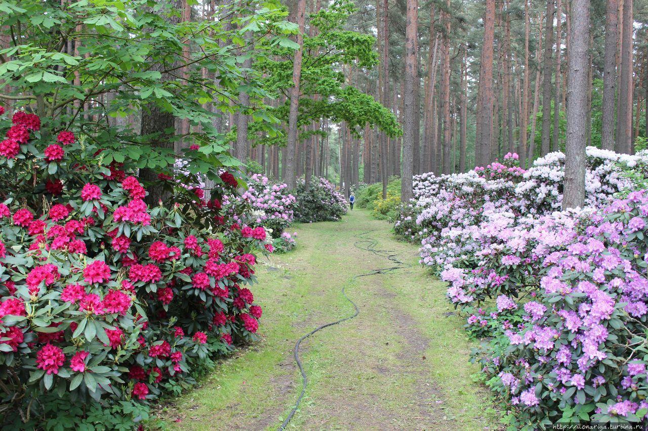 Вечного вам цветения, друзья! Рига, Латвия
