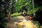 Еще видны следы цивилизации, распиленные деревья, преграждающие тропу.