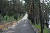 Дорога к резиденции.