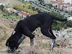Нас всегда и везде в таких местах сопровождали собаки. Этот пес совершил обзор Кайякапы вместе с нами.