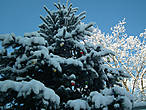 Во дворе у нас уже нарядили елку.  Только вот игрушки затерялись в толще снежного покрова.