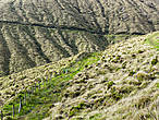 На склоне огромного кратера оставшегося от прошлых вулканических потрясений.