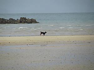 Собака бежит вслед за морем