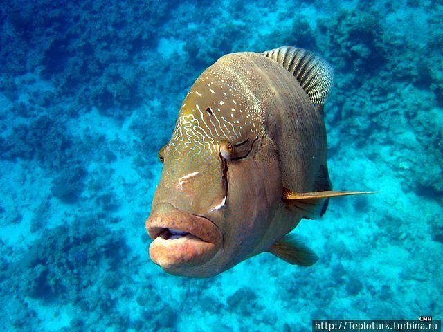рыбки в море фото