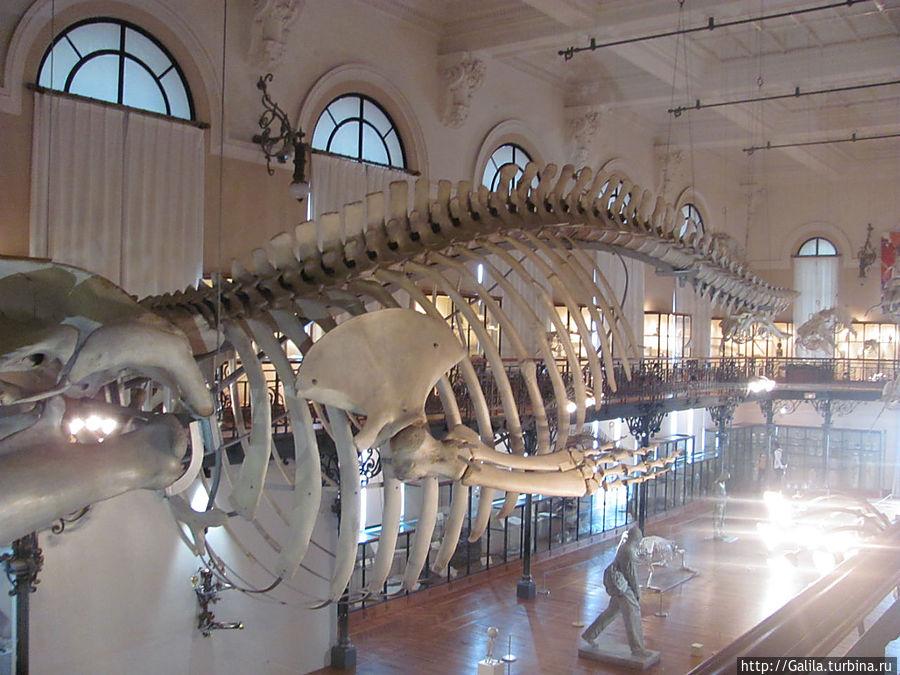 Всё, что осталось от кита.