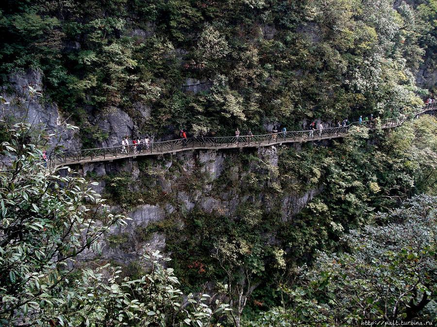 Подвесная тропа Чжанцзяцзе Национальный Лесной Парк (Парк Аватар), Китай