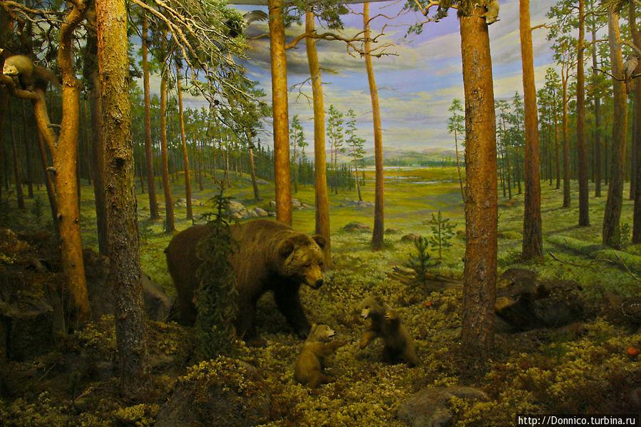 бурых медведей мы не рассчитывали встретить, только белых