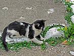 монастыркий кот — объект, повышающий рейтинг любой заметки :)))))))