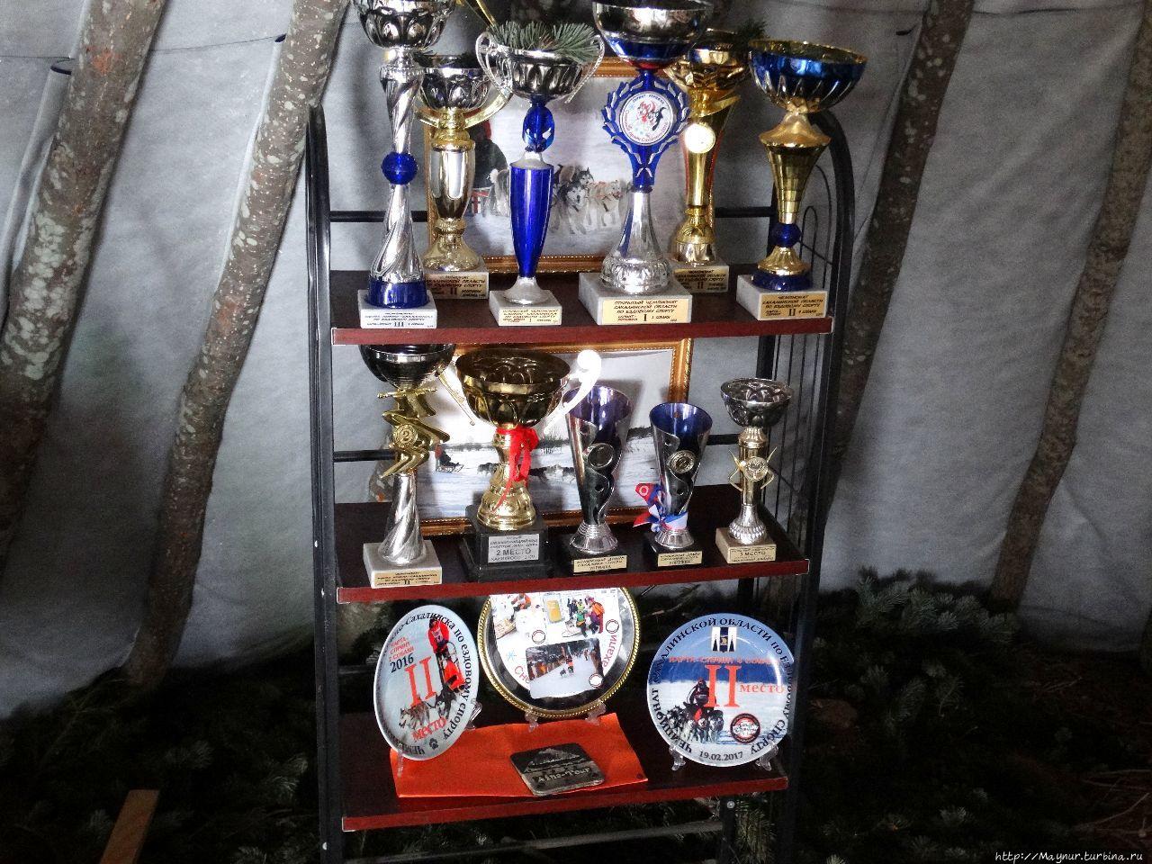 Спортивные трофеи. Два ра