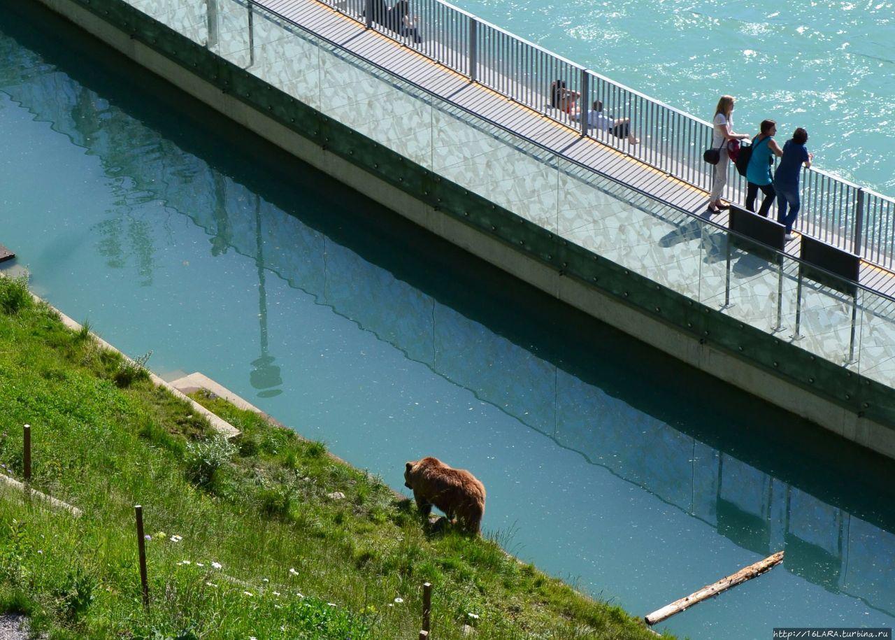 Медведи в Берне