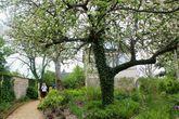Сад у мастерской Ренуара в Эссуа.