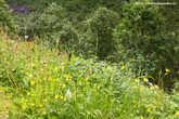 10. Трава, лютики-цветочки — совсем как у нас.