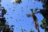 Летучие мыши