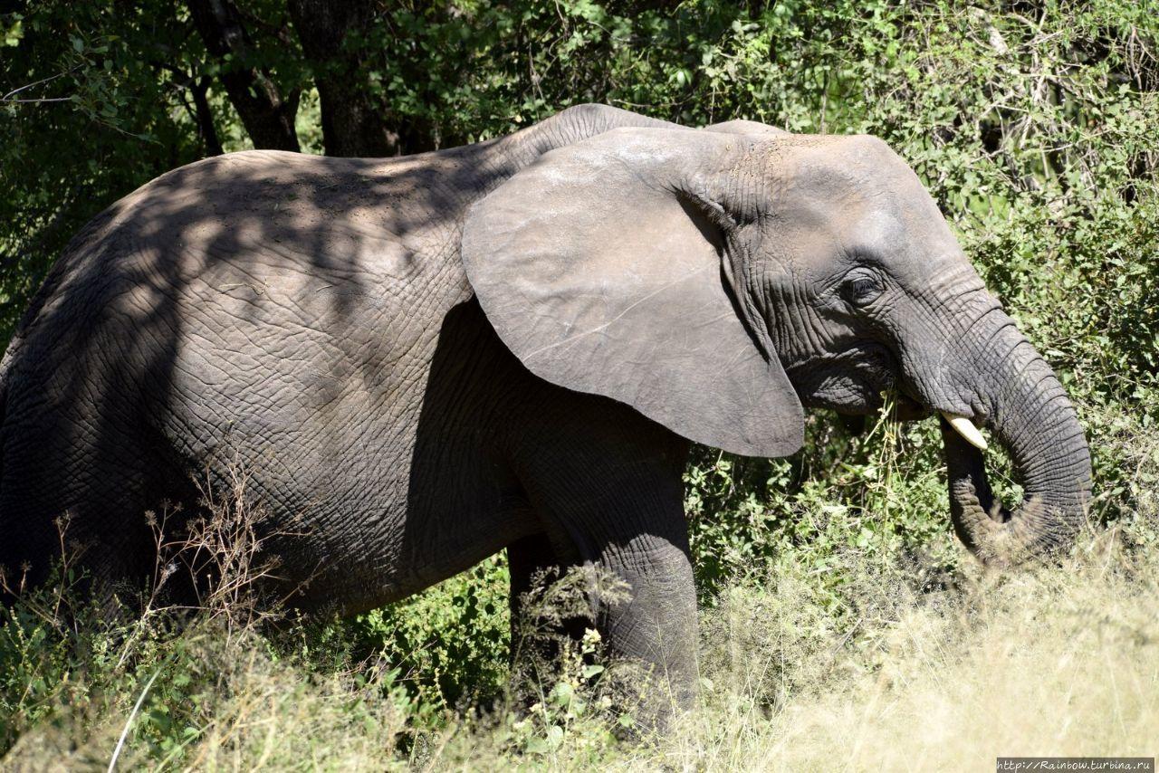 Сафари в  парке  Крюгер Национальный парк Крюгер, ЮАР