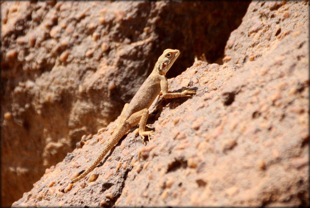 Алжирская Сахара, день первый — по следам Анри Лота Тассилин-Адджер Национальный Парк, Алжир