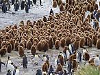 пингвины николай и зигфрид прожили вместе много лет а в эту среду сдали справки чтобы яйцо усыновить