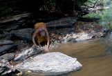 добыча рыбы: сооружение плотины