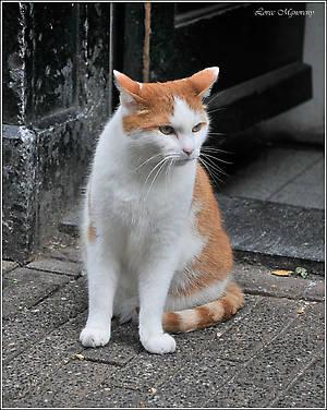 Чем отличаются голландские коты от российских, я с определенностью сказать не могу. Но вот этому мордастому котяре живется в столице Нидерландов, судя по всему, очень даже вольготно. А я же мимо любой живности пройти не могу... *