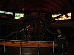 Музей разделён на четыре секции. Первая содержит 150 ископаемых следов, найденных на побережье, вторая имеет 200 скелетов динозавров, крокодилов, рыб и черепах, третья содержит 103 ископаемых растения и одиннадцать фрагментов ствола дерева, а последний — около 6000 беспозвоночных ископаемых. Некоторые модели озвучены, например: тираннозавры, гиганотозавр, дейноних.
