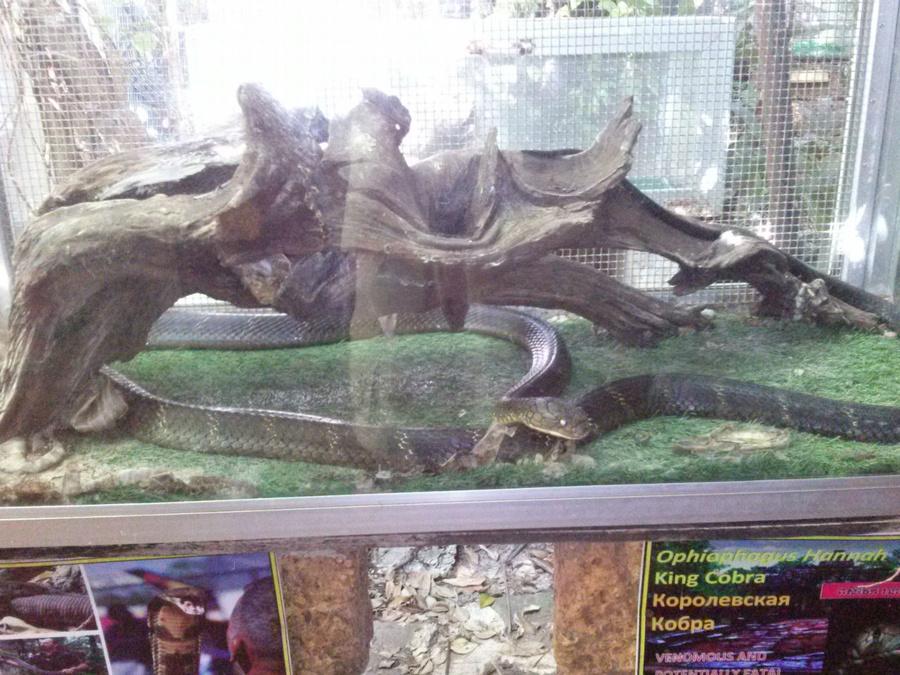 Сиануквиль. Снейк Хаус у Николая Дорошенко Сиануквиль, Камбоджа