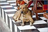 В течение моего повествования о Таиланде в фотографиях будут постоянно мелькать собаки. Их здесь очень много, а я их — люблю... *
